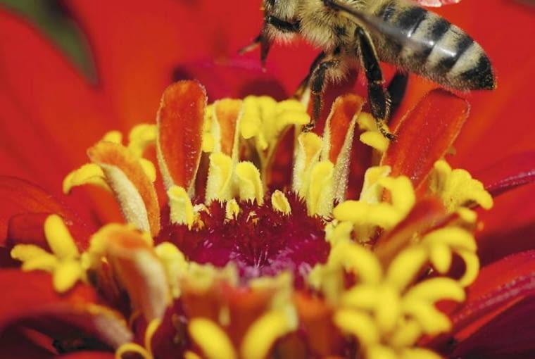 Pszczoły w ogrodzie