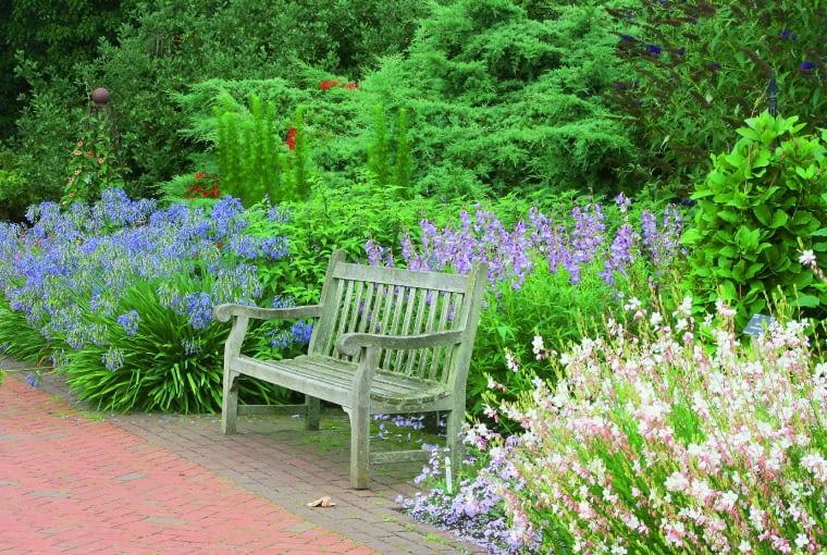 Ławeczkę otulają różowe gaury, liliowe penstemony i niebieskie agapanty.