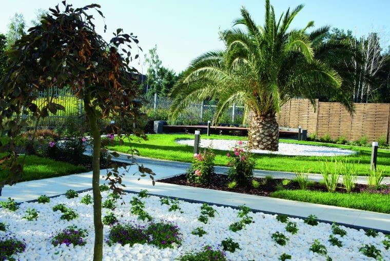 Główna część ogrodu znajduje się za domem. Na pierwszym planie wysypana żwirem kwatera z płaczącym czerwonolistnym bukiem.