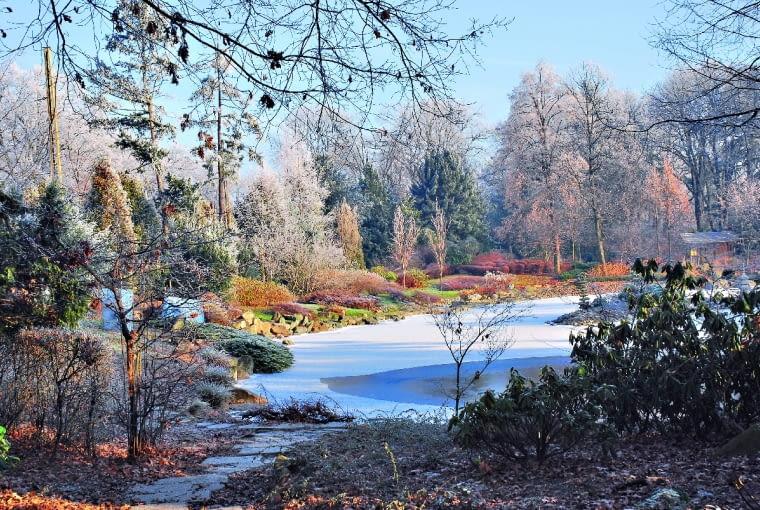 Duży staw zajmuje centrum ogrodu. Rosnące nad nim drzewa oraz krzewy (m.in. irgi, różaneczniki, modrzewie i sosny) tworzą harmonijną kompozycję.