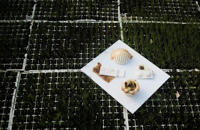 Projekt - SCOBY: opakowania, które żyją, autorstwa Róży Rutkowskiej