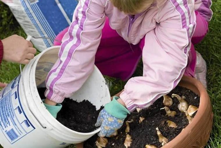 DONICĘ Z CEBULAMI na zimę zabezpieczamy przed mrozem, np. dołując i przykrywając agrowłókniną oraz gałązkami iglaków Na balkonie można wstawić donicę do kartonu wypełnionego np. korą.
