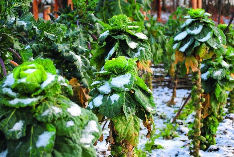 Ogród w lutym
