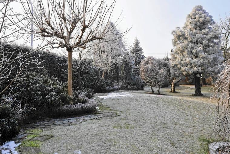 GŁADKI WYPIELĘGNOWANY TRAWNIK to dobre tło dla roślinnych brył rozmieszczonych w przestrzeni ogrodu.