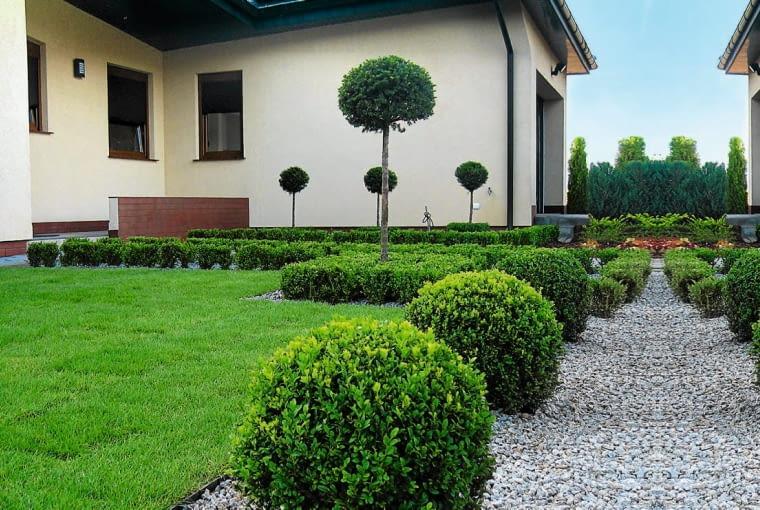 PRZEDOGRÓDEK ze strzyżonych bukszpanów jest zielony przez cały rok.