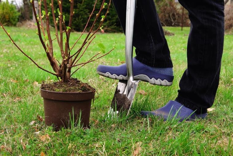 Nowe drzewa i krzewy można sadzić w drugiej połowie marca, kiedy wegetacja już w pełni ruszyła.