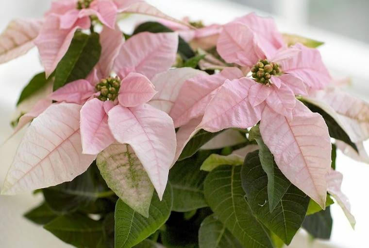 Floradania SLOWA KLUCZOWE: Floradania