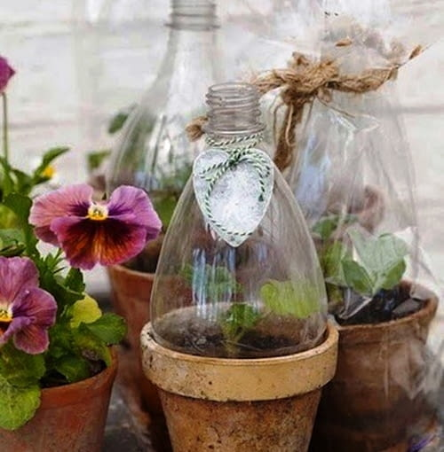 Czasem niektóre rośliny potrzebują więcej ciepła niż inne by lepiej się rozwijać. Do podpędzenia roślin przydatne są mini insekty - można je wykonać z butelki lub po prostu ze zwykłego celofanu. Więcej na: greenhousefarming.net