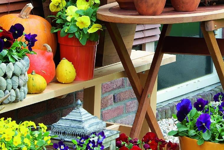 Jesień na balkonie amatora bratków. Choć kojarzą się zwiosną, jesienią można bez trudu kupić sadzonki tych wdzięcznych roślin.