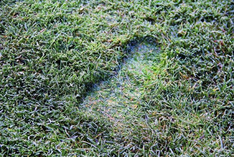 Oszroniony trawnik wygląda pięknie. Unikam jednak chodzenia po nim, bo kiedy się ociepli, wwygniecionych butami miejscach trawa zazwyczaj gnije ina murawie robią się brzydkie 'łysinki'.