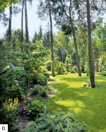 D Wzdłuż ogrodzenia ciągną się rabaty o nieregularnych brzegach