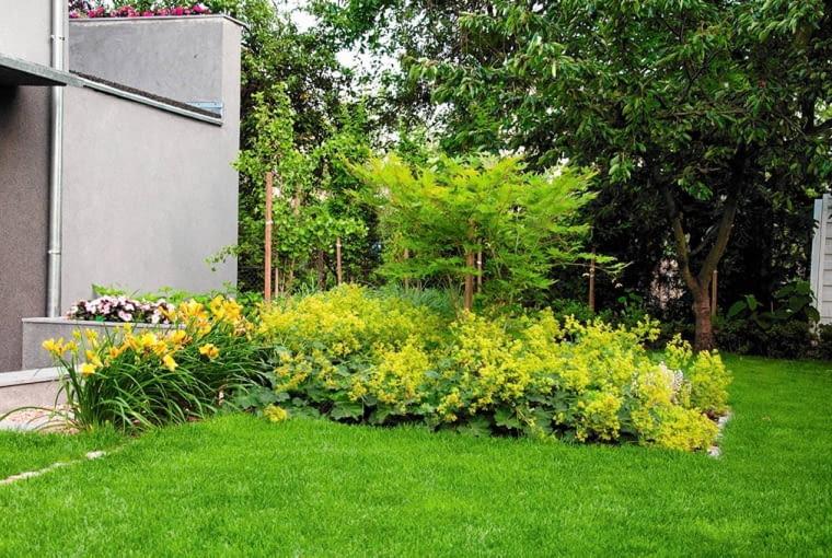 ROŚLINY: w czerwcu na jasnym tle budynku zakwitają liliowce i przywrotniki