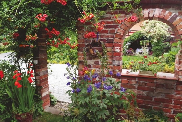 Na mur z cegły w ogrodzie pani Grażyny wspiął się milin.