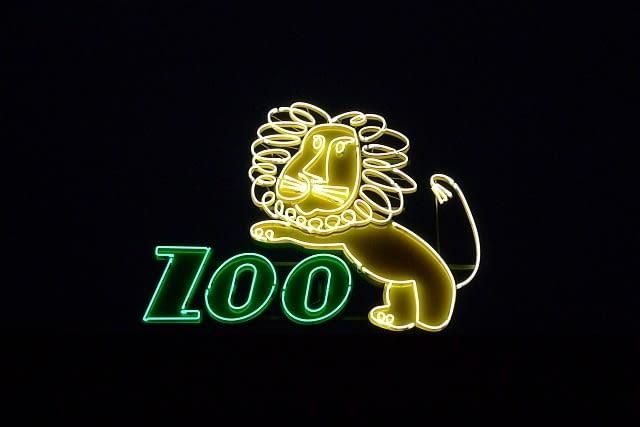 zoo, wrocław, neon