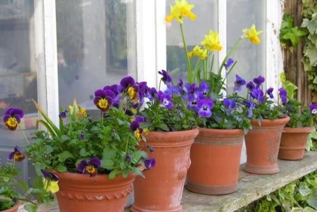 pojemniki z kwiatami