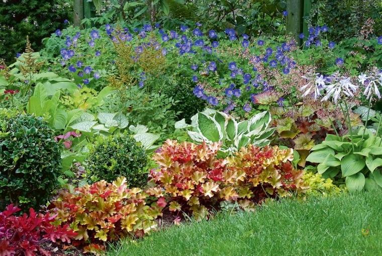 Rabata z roślinami cieniolubnymi nie musi być nudna. Tutaj bodziszki, tawułki i brunery przeplatają się z hostami orazżurawkami.