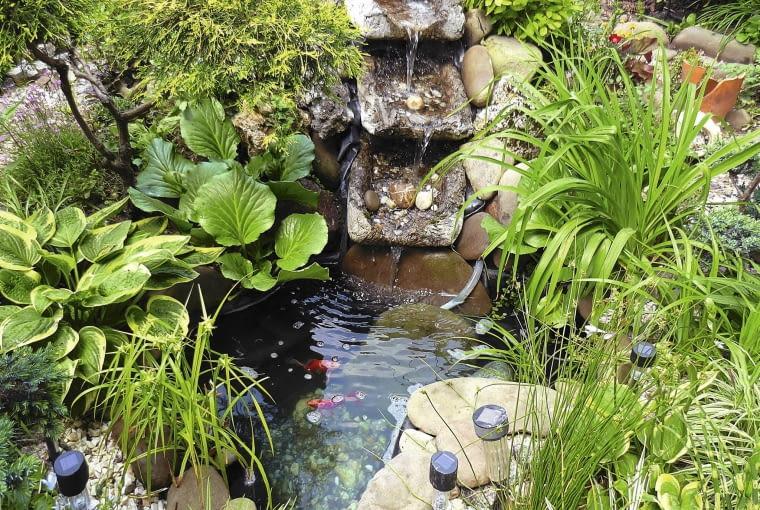 Oczko wodne z kaskadką jest naturalnym poidełkiem dla ptaków. Szczególnie chętnie odwiedzają je kosy.