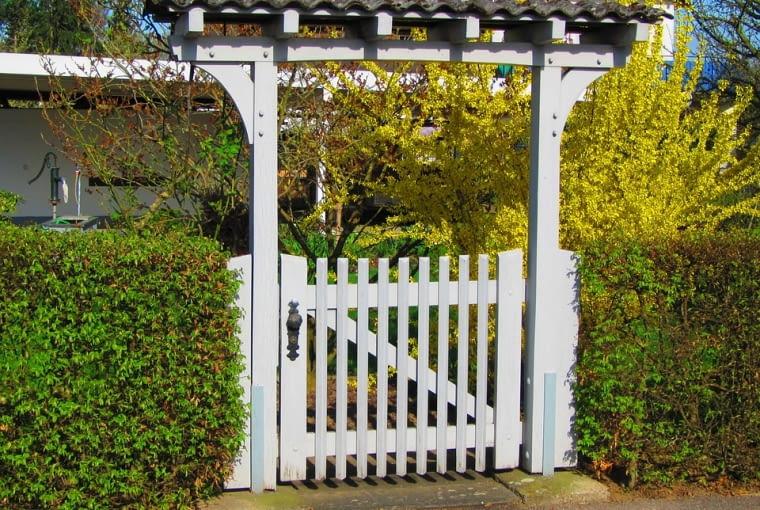 Żywopłoty to ozdoba ogrodu o wielu funkcjach: chronią, stanowią tło dla pojedynczych okazów lub obramowanie rabat i wydzielanych przestrzeni