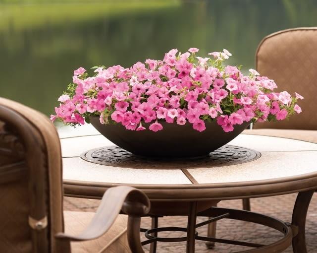Petunia 'vista' jest idealnym kwiatem do uprawy w pojemnikach na balkonie lub tarasie