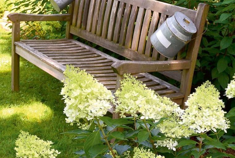 ławeczka wśród hortensji bukietowych zachęca do wypoczynku.