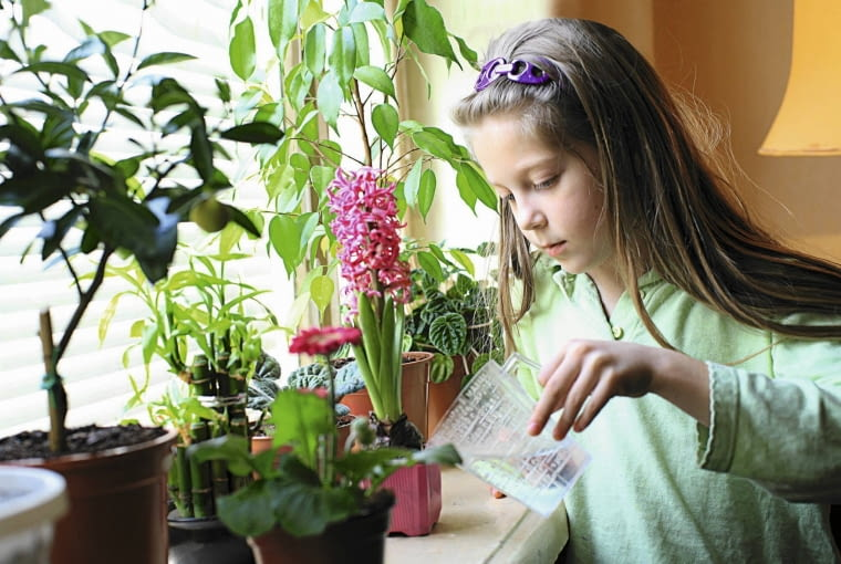 ZANIM PODLEJEMY kwiaty, sprawdźmy, czy podłoże przeschło.