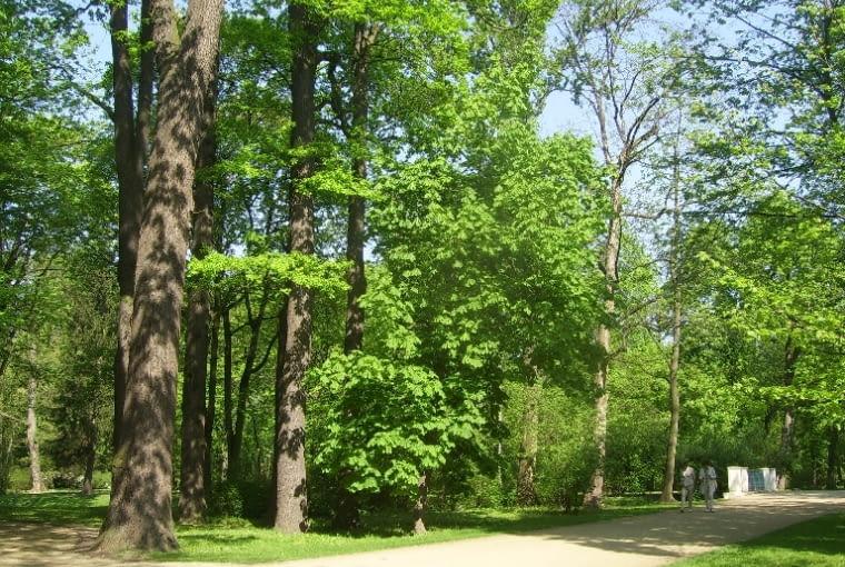 Spacerując po tej części Parku łazienkowskiego możemy podziwiać ciekawe okazy drzew.