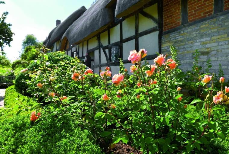 Bez róż nie ma elżbietańskiego ogrodu - stylizowany motyw róży widnieje w herbie Tudorów.