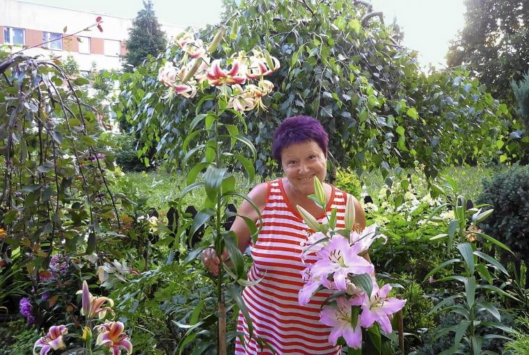 Lilie orienpety to moja największa duma; mam ich w ogródku bardzo dużo.