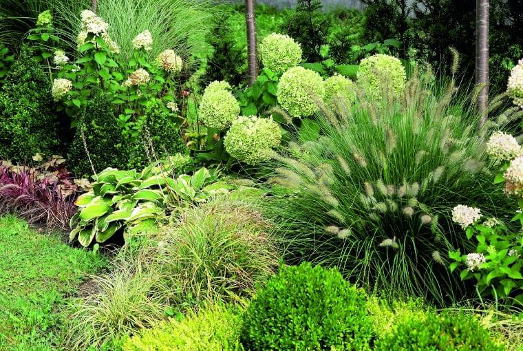 Hortensje, trawy ozdobne i funkie tworzą malowniczą kompozycję.