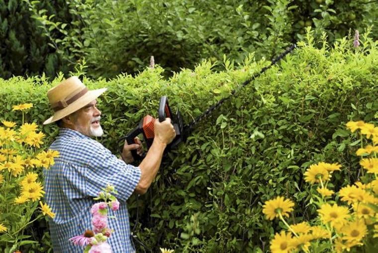 Cięcie żywopłotów liściastych, zrzucających liście