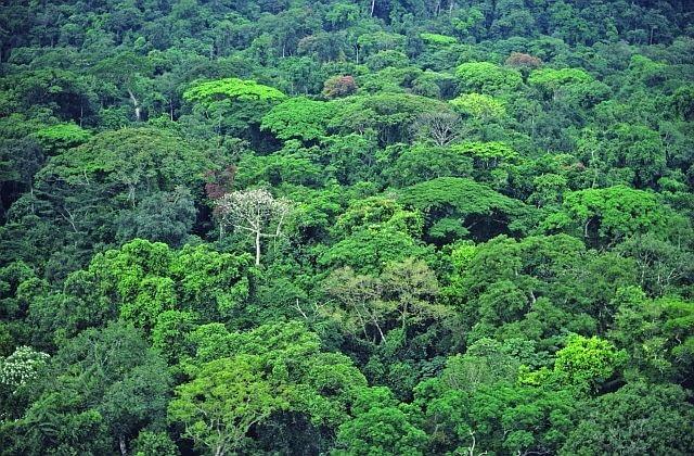 Lasy tropikalne w Brazylii