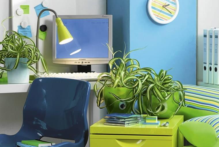Zimmerpflanzen im B´ro: Gr´nlilien SLOWA KLUCZOWE: Agavengew chse B´ro B´ros Chlorophytum Deko Dekoration Gr´nlilien Gr´npflanze Gr´npflanzen Pflanze Pflanzen Topfpflanze Topfpflanzen Zimmerpflanze Zimmerpflanzen Niemand Querformat
