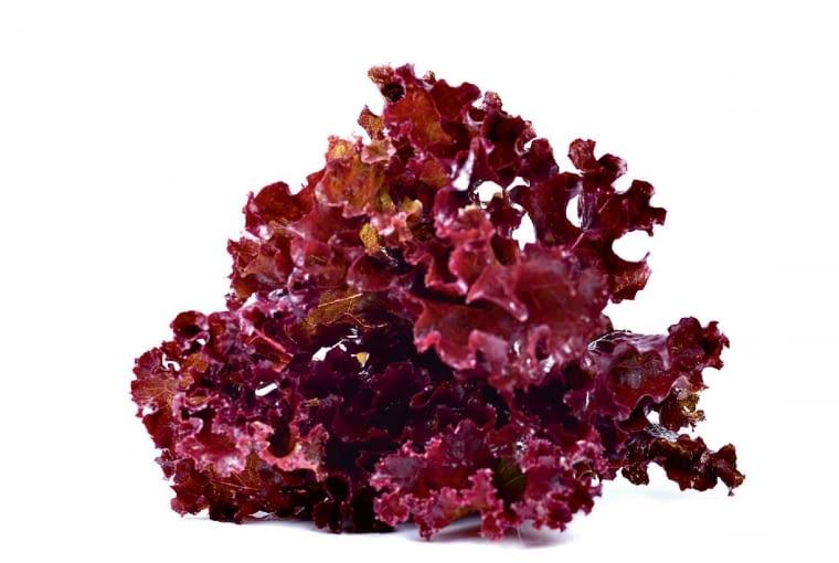 Sałata liściowa składa się zluźnych niedużych liści, zielonych albo purpurowych; te u sałat z grupy dębolistnej mają kształt dębowych, u sałatykędzierzawej (na zdjęciu) są pokarbowane - uodmian typu lollo tak mocno, że wyglądają jak spienione. Zkolei minirozety odmian grupy salanova wystarczy jednym ruchem noża uciąć przy nasadzie, by rozpadły się na blisko setkę drobnych pojedynczych liści. Sałata liściowa ma delikatny smak ikruchość. Jest smacznym składnikiem sałatek ikanapek, dodaje urody każdej potrawie. Jednak szybko więdnie, amokra - się psuje.