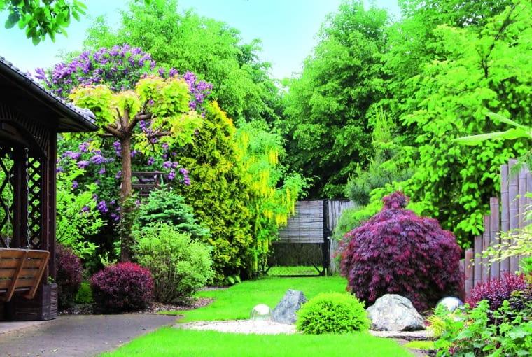Kwitnące krzewy Złotokapu i bzu tworzą wiosną bujną oprawę wejścia do ogrodu.