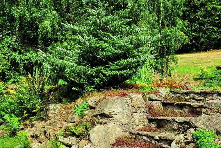 Ścieżki, schodki i przejścia wykonane z lokalnego kamienia szybko nabierają szlachetnej patyny.