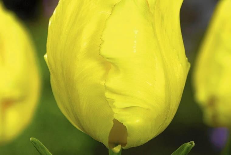 ZDJĘCIE DO WKŁADKI: Cut Flowers spring