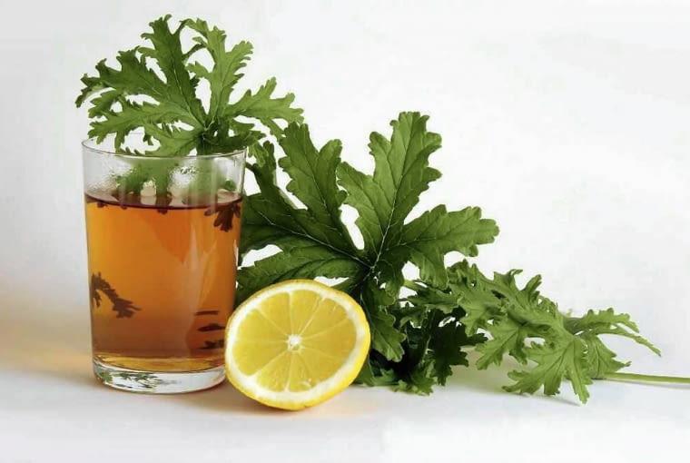 Liście anginki - geranium mozna zaparzać jako herbatkę i pić ją z cytryną