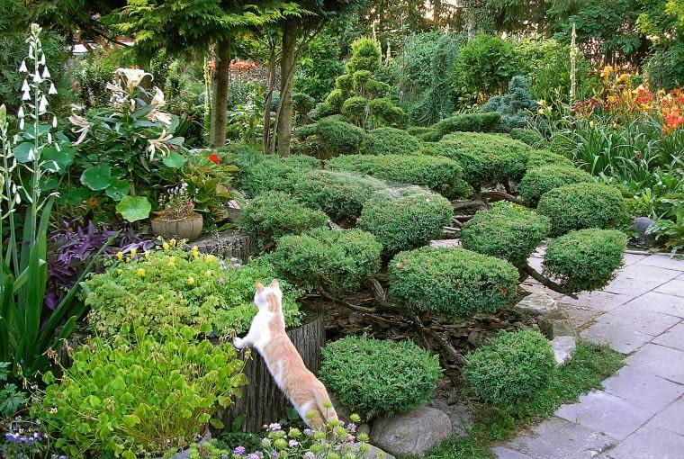 Mój mąż marek sam projektuje i wykonuje elementy małej ogrodowej architektury. Nieduży staw to królestwo ozdobnych kaczek (na zdjęciu samiec mandarynki) i gęsi.W ogrodzie lubimy przebywać nie tylko my - dobrze czują się tu także nasze zwierzęta.