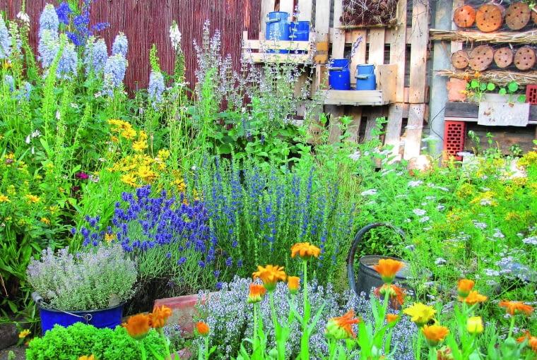 Zieleń ziół ożywiają barwne plamy kwiatów: błękit lawendy, ostróżek i hyzopu oraz ciepłe odcienie żółci nagietków.
