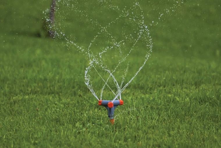 6. Świeżo ułożony trawnik podlewamy (przez pierwsze dni dość obficie)rano lub wieczorem tak, by ziemia stale była wilgotna, ale nie mokra. Przez pierwszy miesiąc lepiej go nie deptać.