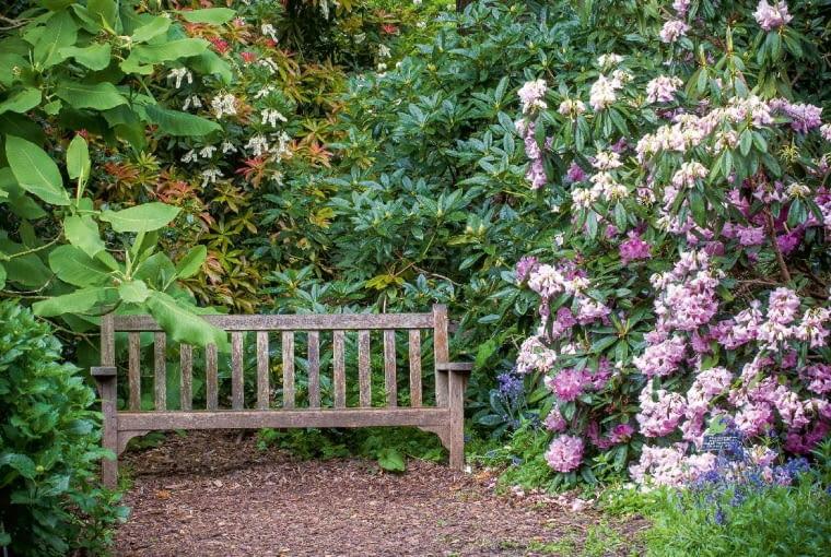 Malownicze zakątki przez cały sezon otula bogactwo kwiatów; gdy przekwitają magnolie, kolejno zakwitają różaneczniki - tutaj 'Pink Bride'.