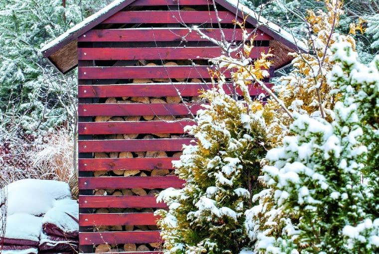 Drewutnia na tle sosen wtowarzystwie złocistych żywotników 'Rheingold' - w zimowej i letniej odsłonie.