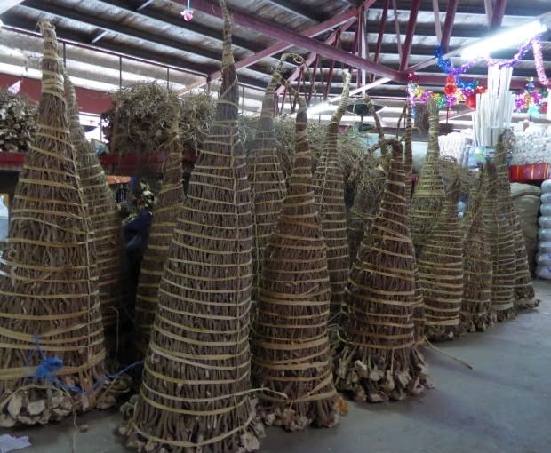 Korzenie rośliny są w Oceanii tradycyjnym prezentem - ich wiązki przynosi się gospodarzom zamiast bukietu kwiatów.