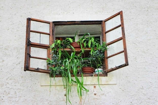 Rośliny domowe powinny mieć dostęp do światła