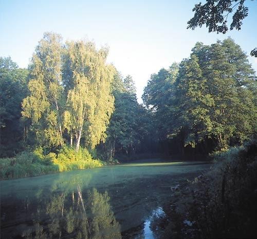 Park Natoliński w Warszawie. Strumień i wyspa w dolnym parku