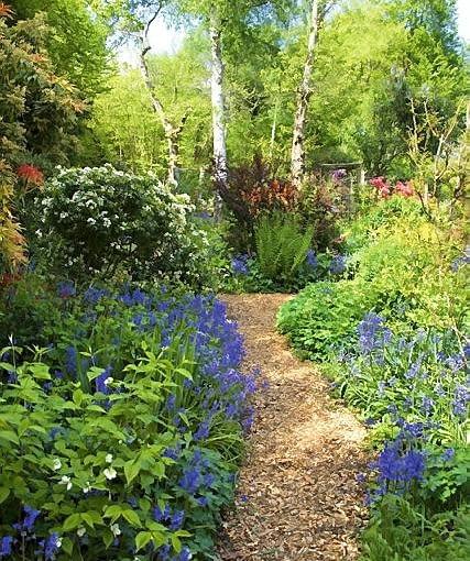 Pathway through woodland garden with bluebells