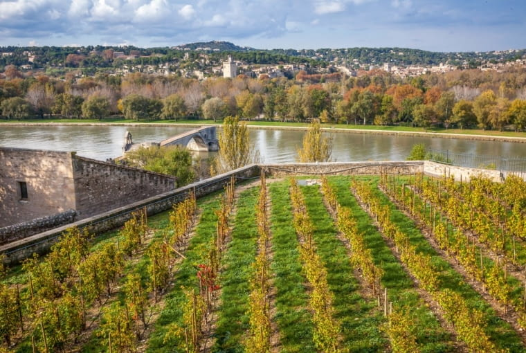 Widok na starą papieską winnicę, rzekę Rodan iresztki przęseł słynnego mostu Saint-Bénezet.