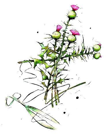 Wrzesień to również czas suszenia kwiatów