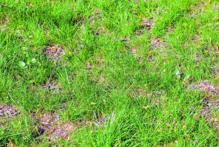 Trawnik.