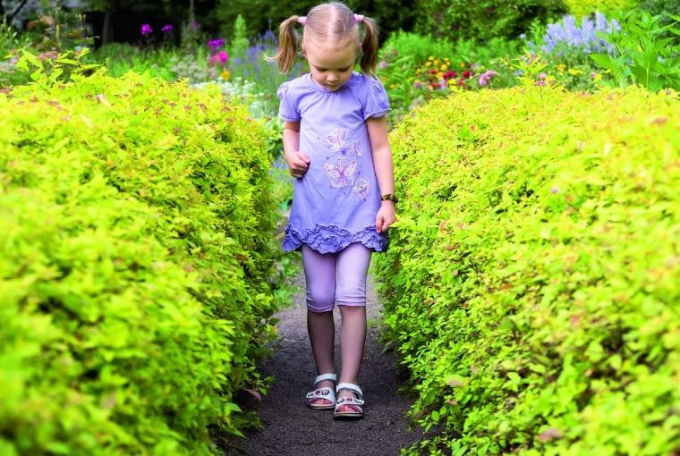 Gruntowa Ścieżka pasuje najbardziej do wiejskiego ogródka. Niestety, wymaga odchwaszczania./Fot. Dmitry Trubitsyn shutterstock